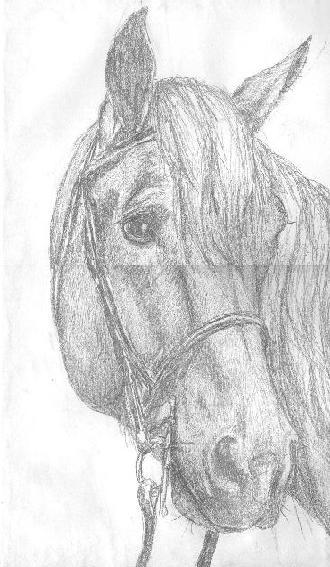 horsehed.jpg